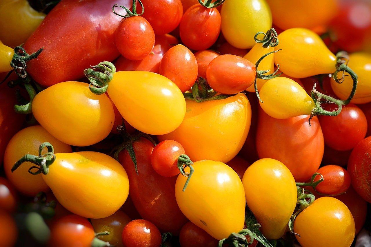Quali sono le varietà di pomodori?